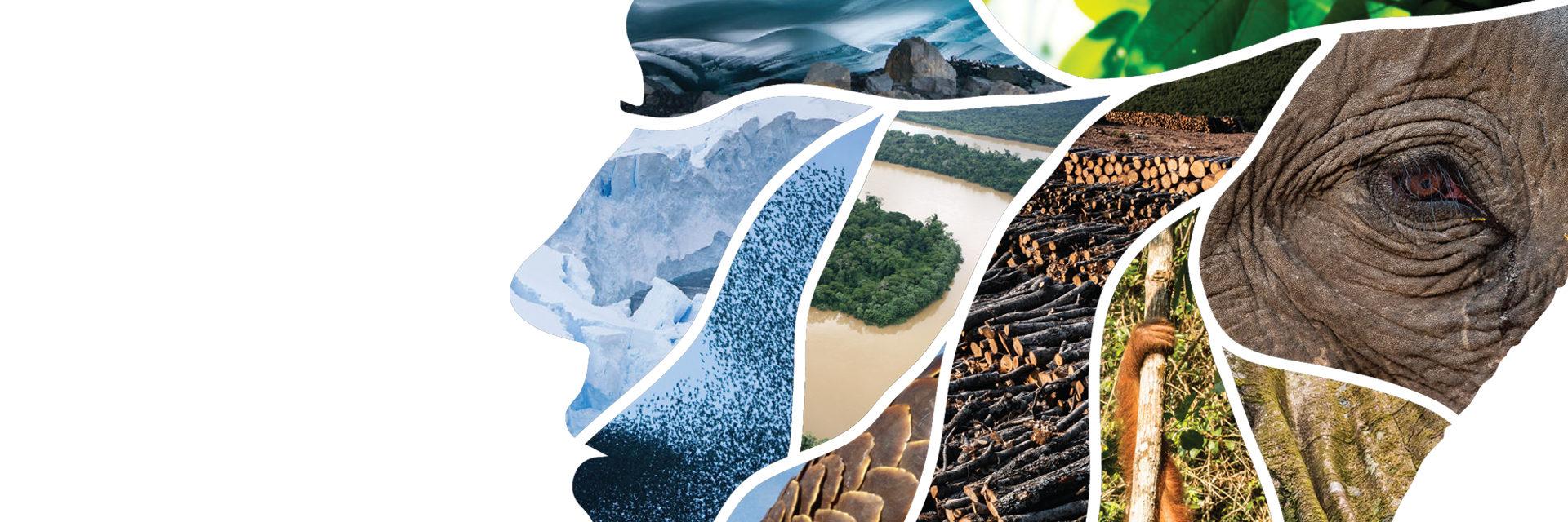 WWF Pandemics banner
